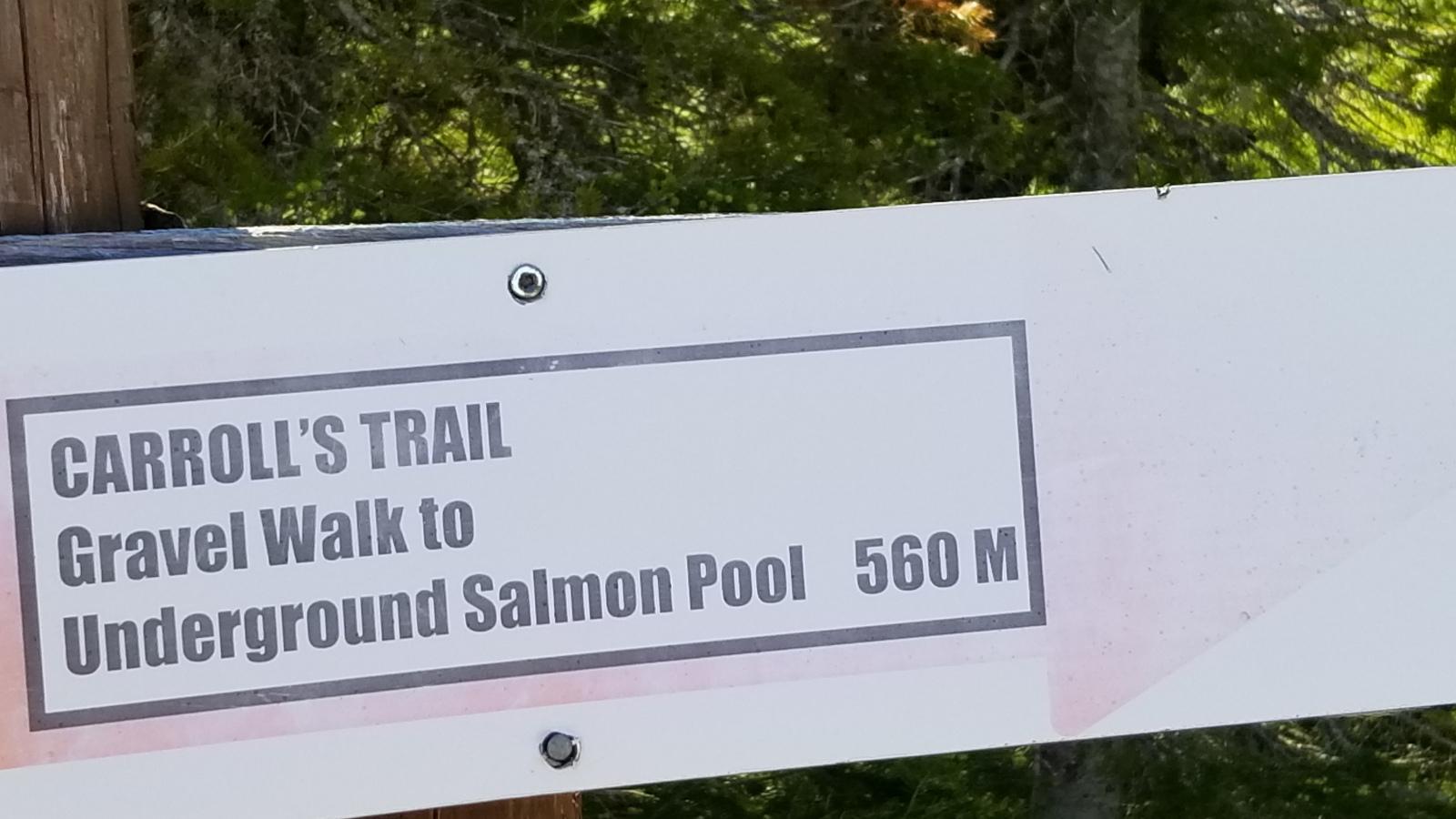 Underground Salmon Pool - Bob's Newfoundland - Roddickton, NL